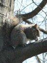 Old Louisville Squirrel