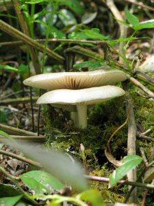 Mushrooms on Alum Cave trail