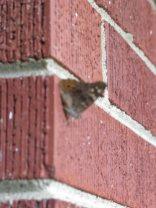 butterflybricks