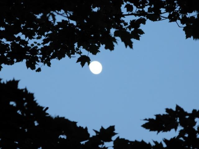 Moon through the trees, Smoky Mountain National Park.