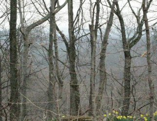 trees in Jefferson Memorial Forest