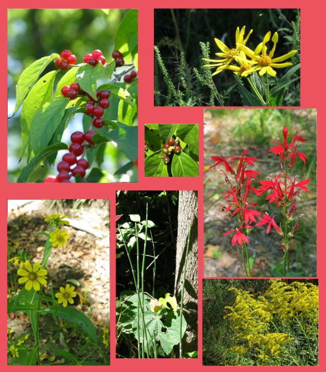 Fall flowers and berries at Washington Township Community Park