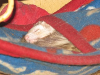 This rabid weasel also suffers from debilitating ennui.