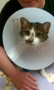 As mad as Billy in a cone.