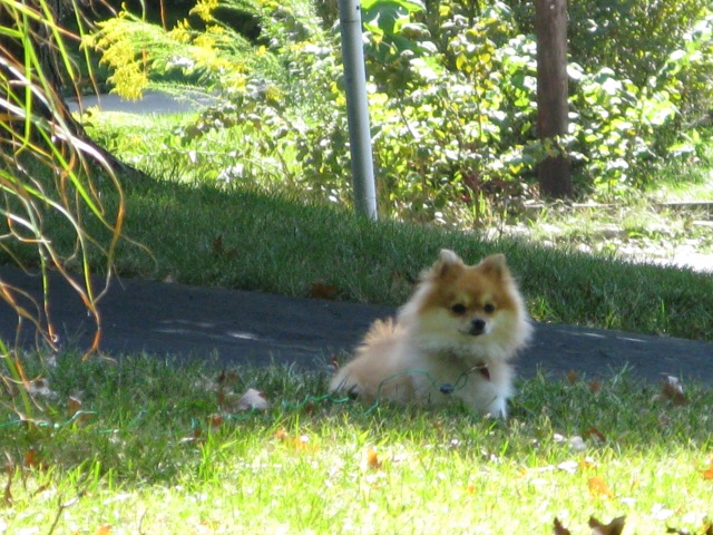 I leave you with this picture of the neighbor's cute doggie, apropos of nothing.  Cute doggie!