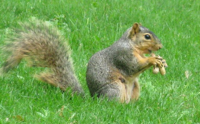 You'll notice that most of my pics feature squirrels munching peanuts.