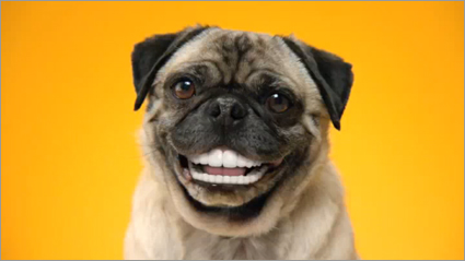 There's me with my new teeth.  Or maybe that's from a dog treat commercial.