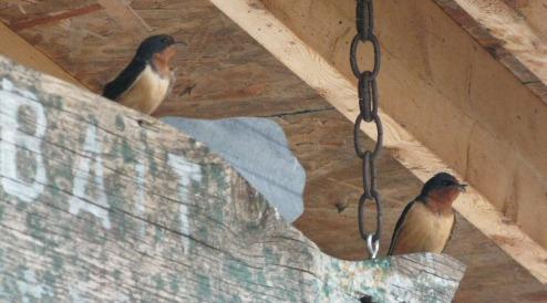 momanddadswallow