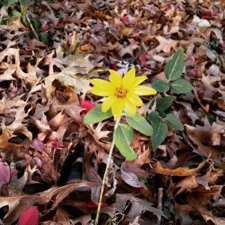 december-flower