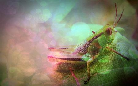 charliegrasshopper